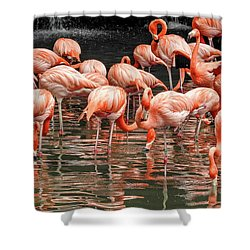 Flamingo Looking For Food Shower Curtain