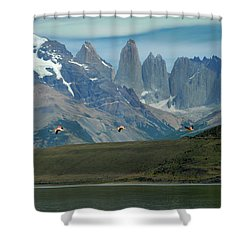 Flamingos Over Lago Nordenskjold Shower Curtain