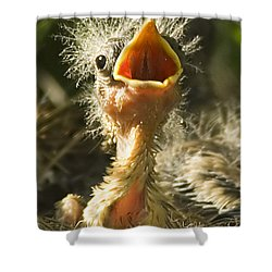 Fledgling Yellow Warbler Shower Curtain