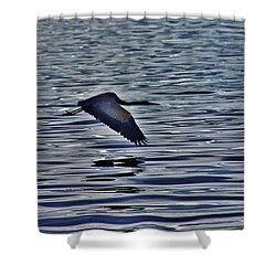 Shower Curtain featuring the photograph Flight Into Sunrise by Craig Wood