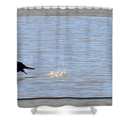 Flight Of The Cormorant Shower Curtain by Robert Clayton