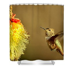 Flight Of The Hummer Shower Curtain by Mike  Dawson