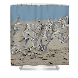Flight Of The Terns Shower Curtain