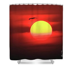 Flight To The Sun Shower Curtain
