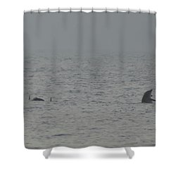 Flipper Shower Curtain by Bill Cannon