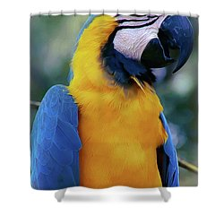 Flirtacious Macaw Shower Curtain by DigiArt Diaries by Vicky B Fuller