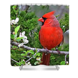 Flirty Red Shower Curtain by James F Towne