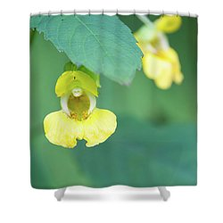 Fll-7 Shower Curtain