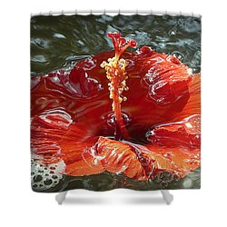 Floating Hibiscus Shower Curtain by Lori Seaman