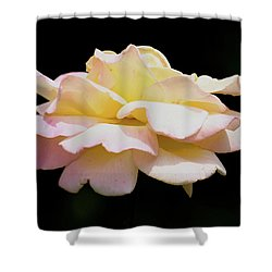 Floating Rose 3894 Shower Curtain