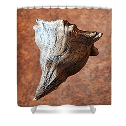 Floating Shell Shower Curtain by Christopher Holmes