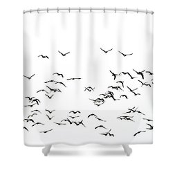 Flock Of Beautiful Migratory Lapwing Birds In Clear Winter Sky I Shower Curtain