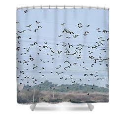 Flock Of Beautiful Migratory Lapwing Birds In Clear Winter Sky Shower Curtain