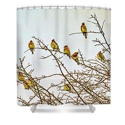 Flock Of Cedar Waxwings  Shower Curtain by Geraldine Scull