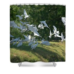 Flock Of Egrets In Flight Shower Curtain