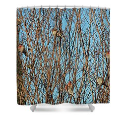 Flock Of Finches Shower Curtain