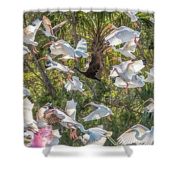 Flock Of Mixed Birds Taking Off Shower Curtain