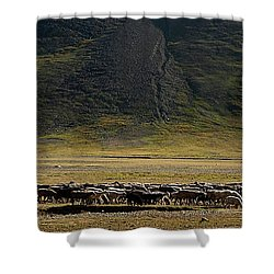 Flock Of Sheep Shower Curtain by Konstantin Dikovsky