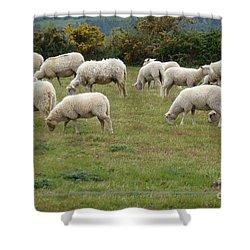 Flock Of Sheeps Shower Curtain by Jean Bernard Roussilhe