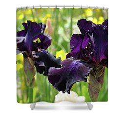 Floral Art Deep Purple Iris Flowers Irises Baslee Troutman Shower Curtain by Baslee Troutman