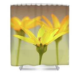 Floral Brilliance Shower Curtain