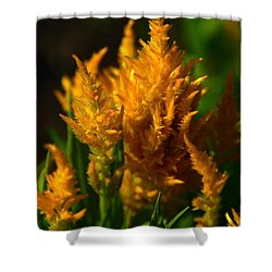Shower Curtain featuring the photograph Floral Fire by Jesse Ciazza