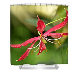 Floral Flair Shower Curtain by Deborah  Crew-Johnson