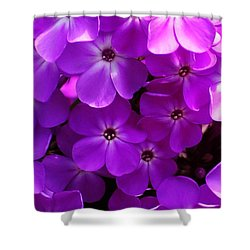 Floral Glory Shower Curtain by David Lane