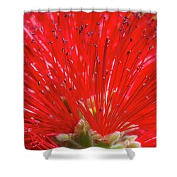 Floral Red Shower Curtain