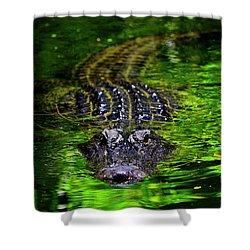 Florida Alligator Encounter Shower Curtain