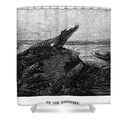 Florida Alligators, 1886 Shower Curtain by Granger