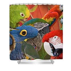 Florida Birds Shower Curtain