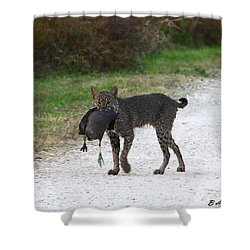 Florida Bobcat Catches An Evening Snack Shower Curtain