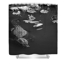 Florida Gator Shower Curtain