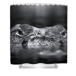 Florida Gator Shower Curtain