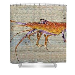 Florida Lobster Shower Curtain