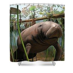 Florida Manatee Diorama Shower Curtain