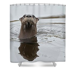 Florida Otter Shower Curtain