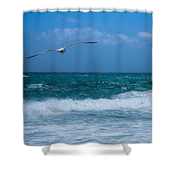 Shower Curtain featuring the photograph Florida Seagull In Flight by Jason Moynihan