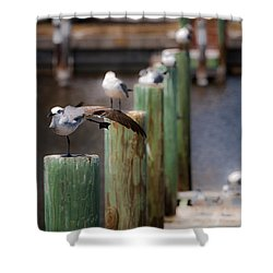 Florida Seagull Playing Shower Curtain