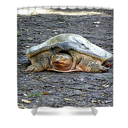 Shower Curtain featuring the photograph Florida Softshell Turtle 002 by Chris Mercer
