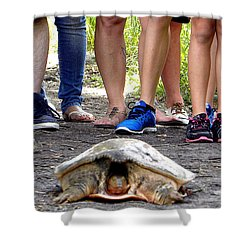 Shower Curtain featuring the photograph Florida Softshell Turtle 003 by Chris Mercer