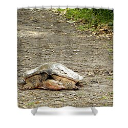 Shower Curtain featuring the photograph Florida Softshell Turtle  by Chris Mercer