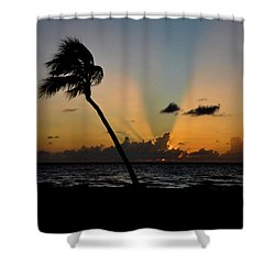 Florida Sunrise Palm Shower Curtain by Kelly Wade