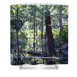 Florida Swamp Shower Curtain by Kenneth Albin