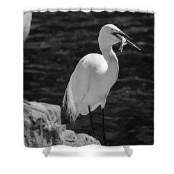 Florida White Egret Shower Curtain