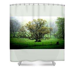 Flourish Where You Grow Shower Curtain by Angela Davies
