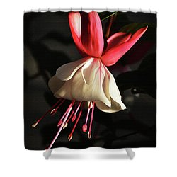 Flower 0021-a Shower Curtain by Gull G