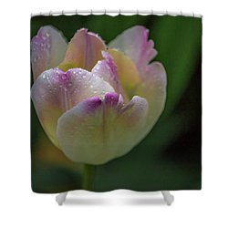 Shower Curtain featuring the photograph Flower 654853 by Timothy Latta