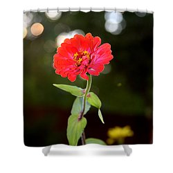 Shower Curtain featuring the photograph Flower And Hope by Vadim Levin